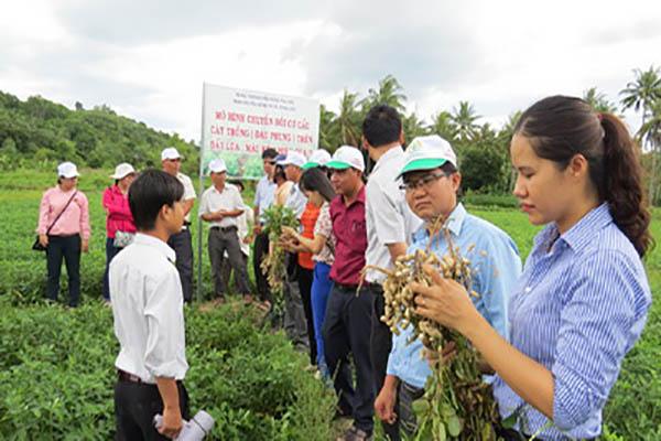 Mô hình trồng đậu phộng trên đất lúa tại xã Xuân Thọ 2 (TX Sông Cầu) - Ảnh: LÊ TRÂM