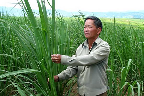 Ứng dụng công nghệ cao vào sản xuất nông nghiệp góp phần tăng trưởng xanh và phát triển bền vững môi trường - Ảnh: HIỀN LƯƠNG