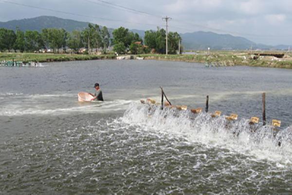 Vùng nuôi tôm hạ lưu sông Bàn Thạch (huyện Đông Hòa) cần sớm được quy hoạch chi tiết - Ảnh: ANH NGỌC