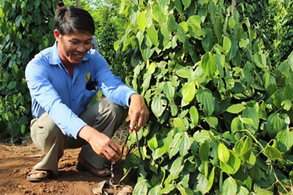 Hệ thống tưới nước tự động giúp cây trồng chủ lực vùng miền núi phát triển tốt trong điều kiện biến đổi khí hậu - Ảnh: MINH DUYÊN