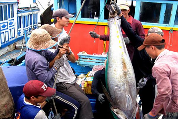 Ngư dân TP Tuy Hòa chuyển cá ngừ đại dương lên bờ sau chuyến đánh bắt dài ngày trên biển - Ảnh: ANH NGỌC