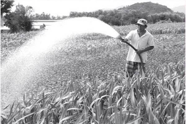 Nông dân thôn Ngọc Sơn Đông, xã Hòa Quang Bắc (huyện Phú Hòa) chăm sóc vườn hoa. Ảnh: CTV