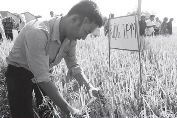 Mô hình sản xuất áp dụng phương pháp phòng trừ dịch hại tổng hợp IPM ở HTX Hòa Bình 1 (huyện Tây Hòa) . Ảnh: MINH DUYÊN