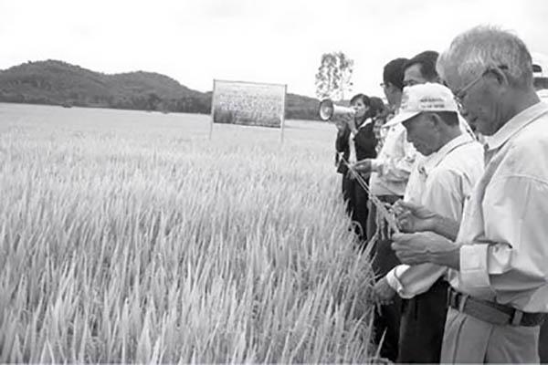 Mô hình sản xuất lúa chất lượng TBR45 tại xã An Nghiệp, huyện Tuy An, tỉnh Phú Yên. Anh: CTV