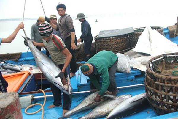 Bám biển đánh bắt cá ngừ ở quần đảo Trường Sa và Hoàng Sa, thế mạnh của ngư dân Phú Yên - Ảnh: Phương Nam