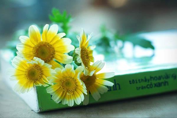 Mùa xuân về nơi xứ sở hoa vàng cỏ xanh