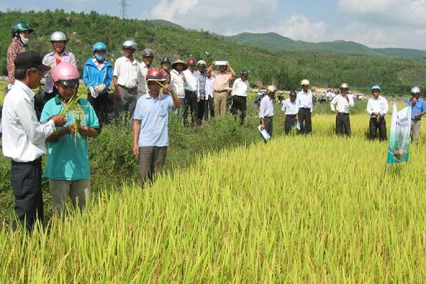 Nông nghiệp và nông thôn Phú Yên hướng đến mục tiêu phát triển hiệu quả và bền vững.