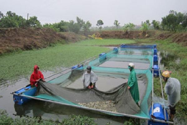 Nghiên cứu sinh sản nhân tạo cá mương, cá diếc