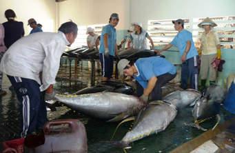 Bà con ngư dân khai thác, đánh bắt cá