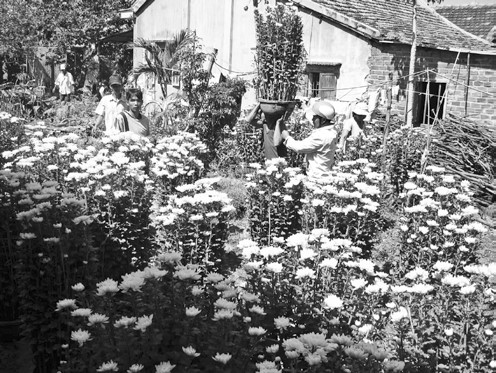 Xây dựng làng hoa, cây cảnh Phước hậu gắn với phát triển du lịch