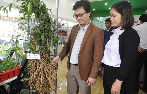Ông Dương Bình Phú, Phó Giám đốc Sở KH-CN giới thiệu cây dược liệu đến du khách tham quan Điểm kết nối cung - cầu công nghệ - Ảnh: THÁI HÀ