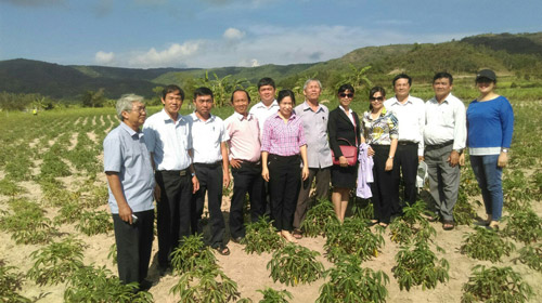Đoàn giám sát đi thực tế tại diện tích trồng sắn ở xã  Xuân Sơn Nam, huyện Đồng Xuân, Phú Yên.