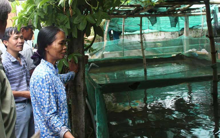 Nông dân thị trấn Củng Sơn (huyện Sơn Hòa) tham quan mô hình nuôi chình, cá lóc trong bể xi măng tại xã An Mỹ (huyện Tuy An) - Ảnh: THÁI HÀ