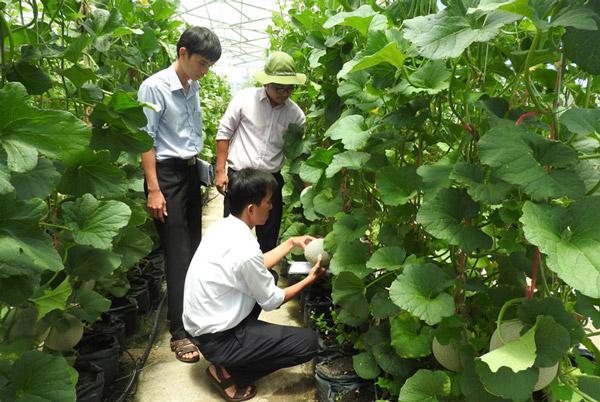 """Nông dân ngại trồng dưa """"công nghệ cao"""""""