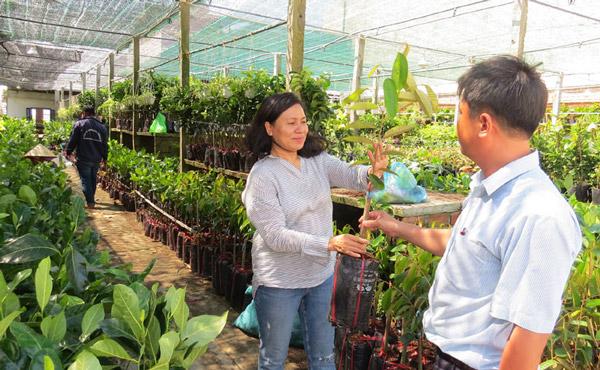 Cán bộ Trung tâm Khuyến nông kiểm tra cây giống tại Công ty TNHH Hoàng Phượng trước khi giao nhận với nông dân - Ảnh: LÊ TRÂM