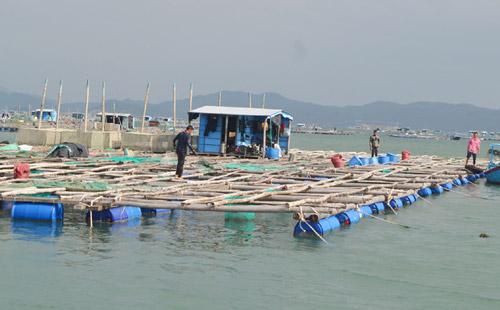 Hướng đến phát triển nuôi biển bền vững