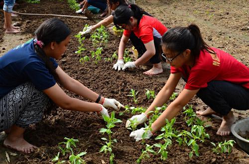 Du khách trồng rau cùng nông dân xã Bình Ngọc (TP Tuy Hòa) - Ảnh: LÊ MINH
