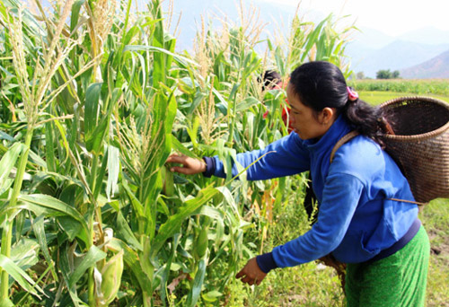 Sơn Hòa: Phân bổ 33,7 tỉ đồng vốn giảm nghèo bền vững