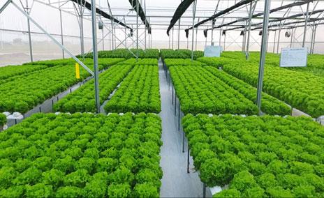 Khánh thành điểm trình diễn mô hình ứng dụng công nghệ cao trong nông nghiệp