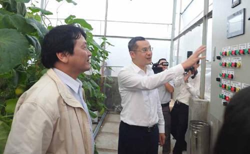 Chủ tịch UBND tỉnh Phạm Đại Dương tham quan mô hình trồng sung magic sử dụng hệ thống IoT tại Trung tâm Ứng dụng và Chuyển giao công nghệ Phú Yên - Ảnh: THÁI HÀ