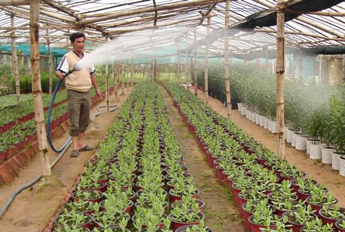 Nông dân phường Phú Lâm (TP Tuy Hòa) áp dụng tiến bộ kỹ thuật vào trồng hoa và rau, mang lại hiệu quả kinh tế cao - Ảnh: PV