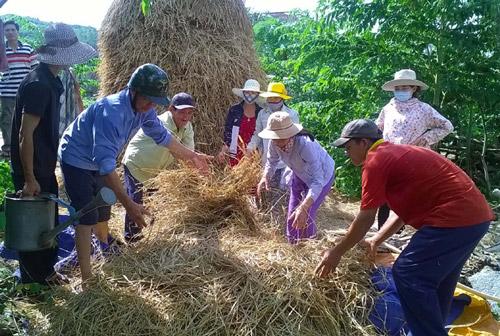 Nông dân thôn Phú Liên, xã Bình Kiến (TP Tuy Hòa) học chế biến thức ăn cho bò từ rơm - Ảnh: TRUNG HIẾU