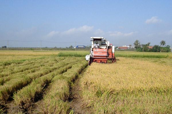 Lai tạo giống lúa mới có năng suất cao, đưa cơ giới hóa vào sản xuất nông nghiệp, giúp nông dân nâng cao thu nhập. Ảnh: MINH ĐĂNG