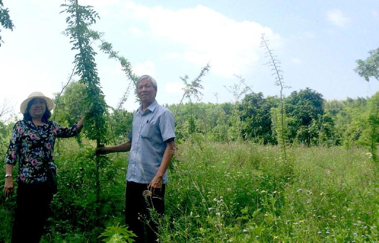 Ông Lê Văn Thứng, Chủ tịch Hội Bảo vệ thiên nhiên và môi trường (Liên hiệp hội) thực hiện đề tài Bảo tồn cây trắc tại thôn Cẩm Tú, xã Hòa Kiến, TP Tuy Hòa. Ảnh: THÁI HÀ