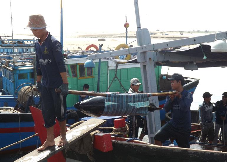 Ngư dân Phú Yên chuyển cá ngừ đại dương từ cảng vào bờ sau chuyến biển dài ngày. Ảnh: PV