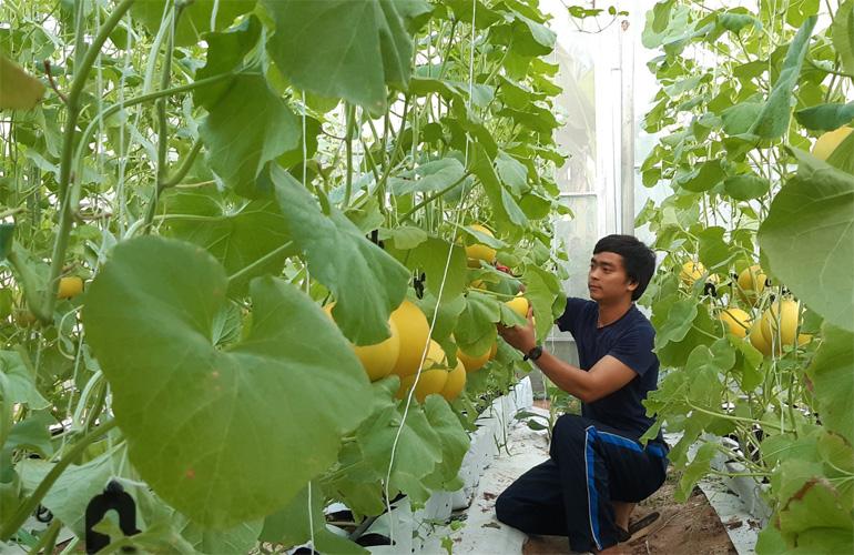 Nông nghiệp công nghệ cao: Làm giàu nhưng không làm liều