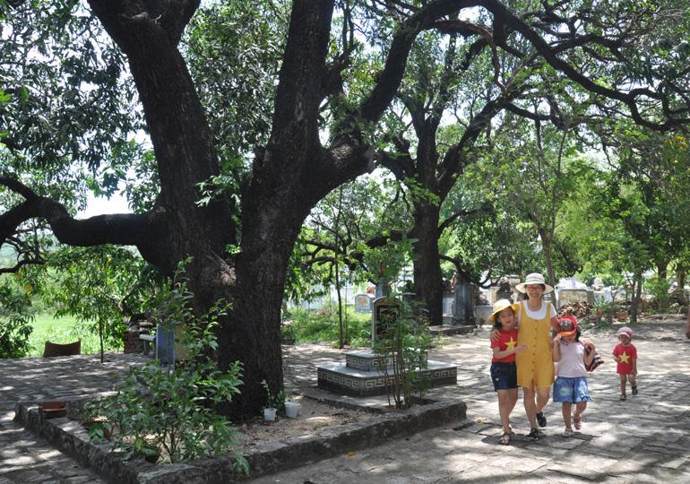 Cụm 20 cây xoài hơn 220 năm tuổi ở chùa Đá Trắng được Hội đồng Cây di sản Việt Nam công nhận là Cây di sản vào năm 2013. Ảnh: MINH NGUYỆT
