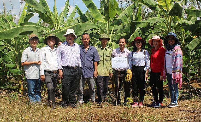 ThS Trương Hùng Mỹ (trái) trong dịp chuyển giao kỹ thuật trồng chuối cấy mô cho người dân huyện Tuy An. Ảnh: THÁI HÀ