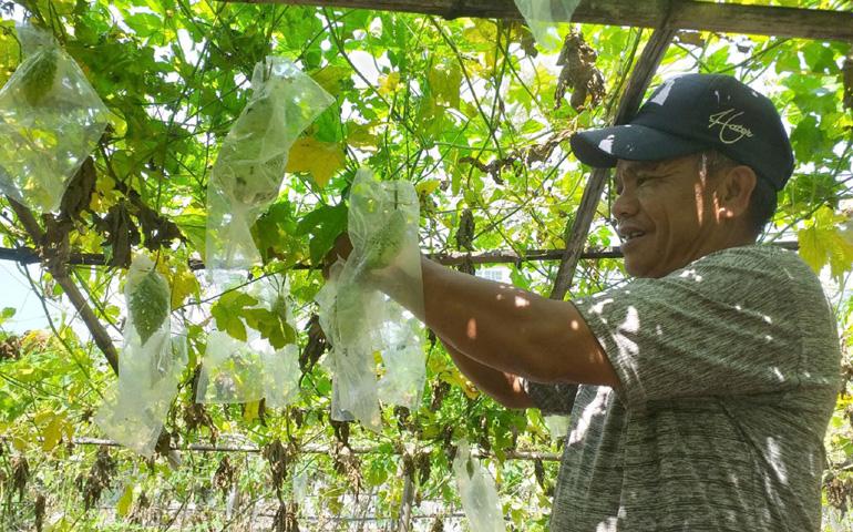 Ông Đời trồng rau theo hướng an toàn