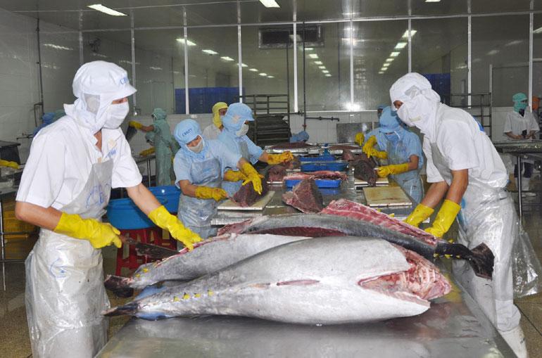 Cá ngừ đại dương là sản phẩm xuất khẩu chủ lực của tỉnh Phú Yên trong những năm qua. Ảnh: PV