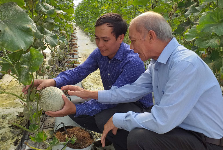Mô hình dưa lưới tại Khu Nông nghiệp ứng dụng công nghệ cao Phú Yên được áp dụng công nghệ tưới tiên tiến. Ảnh: THÁI HÀ